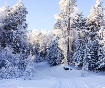 invierno_extremo